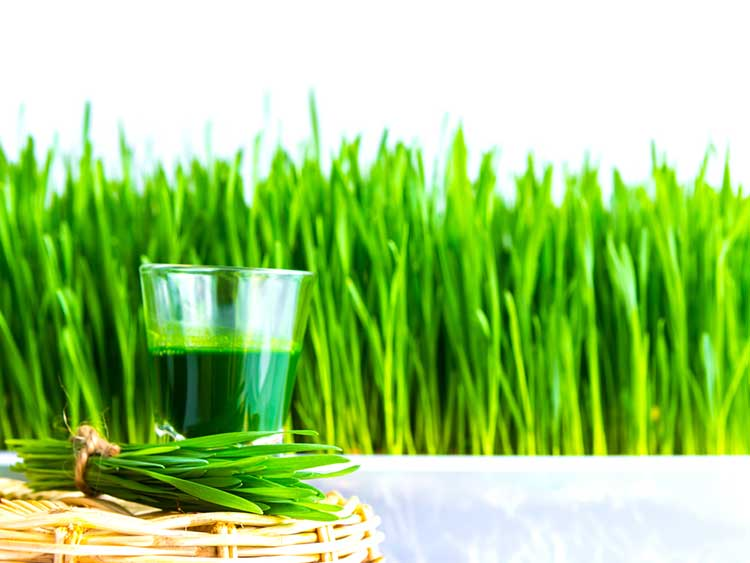 Wheatgrass and shot For Detox