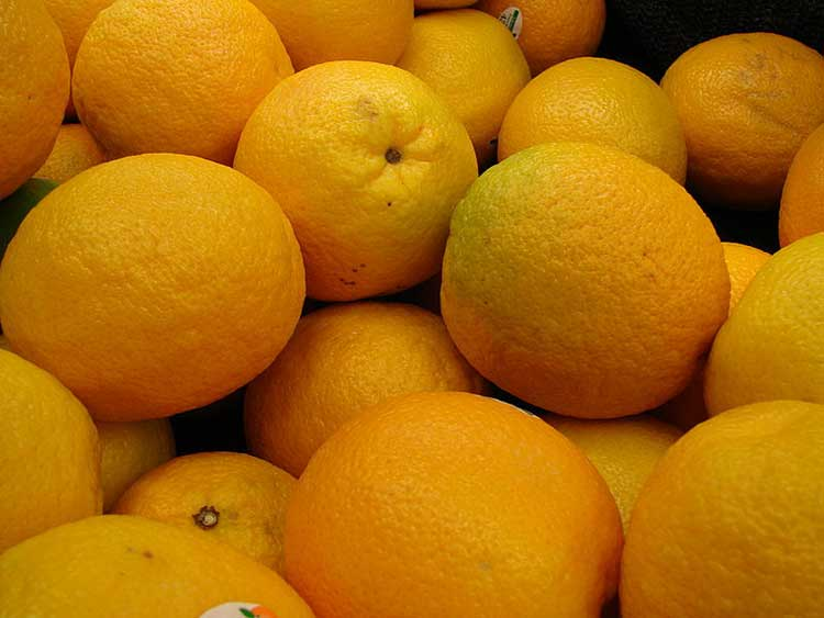 Valencia Orange Ready For Juicing