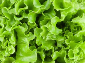 lettuce ready to be juiced